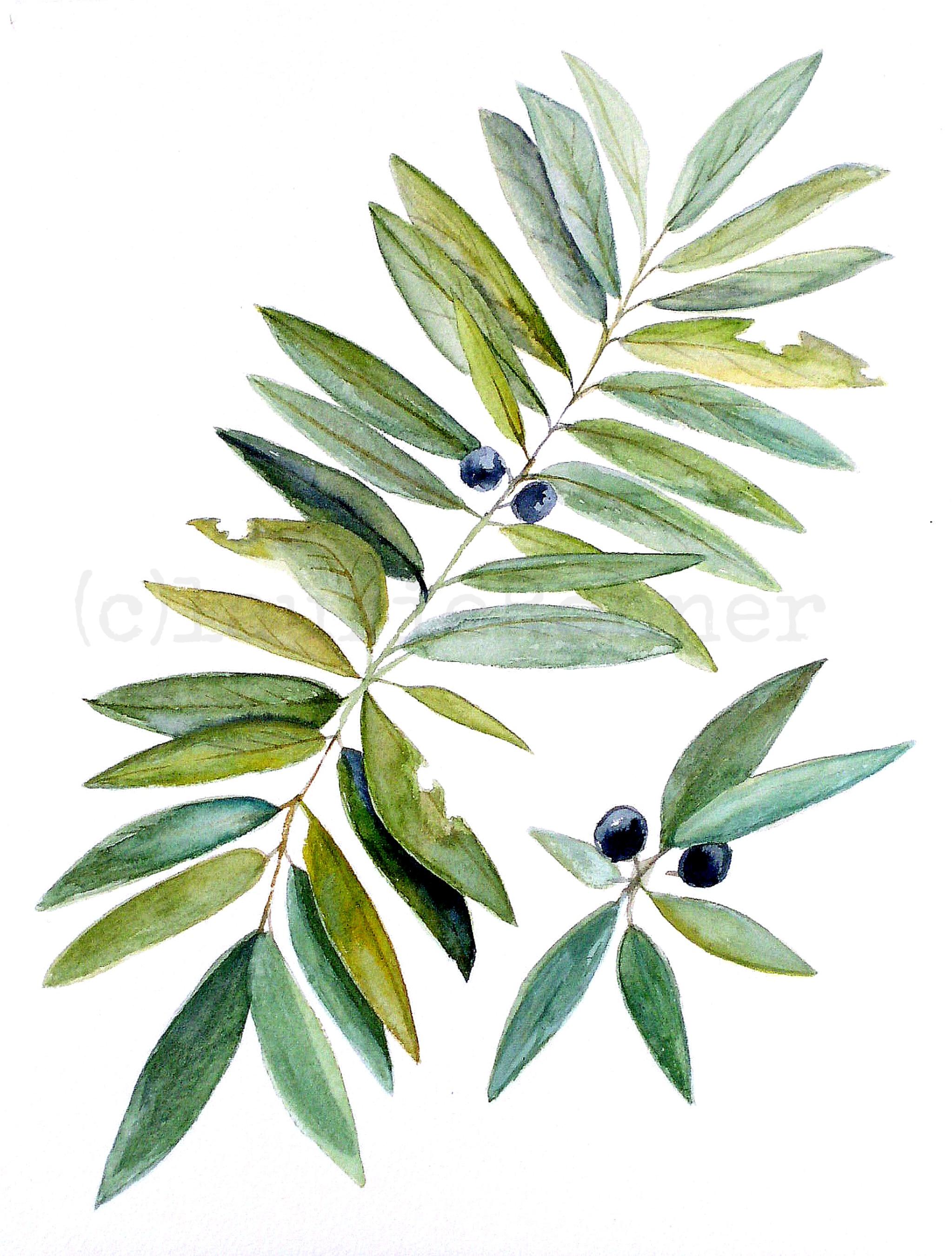 Botanical nature art leaves and berries watercolor for Watercolor greenery
