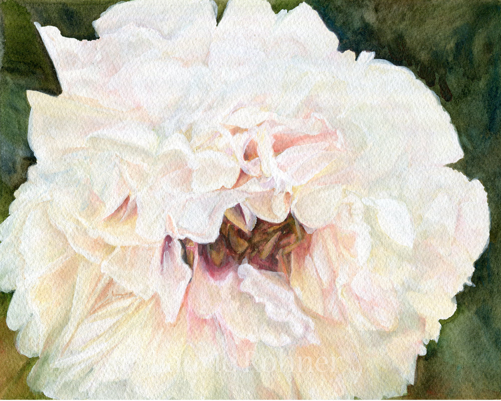 White Peony Watercolor on Paper